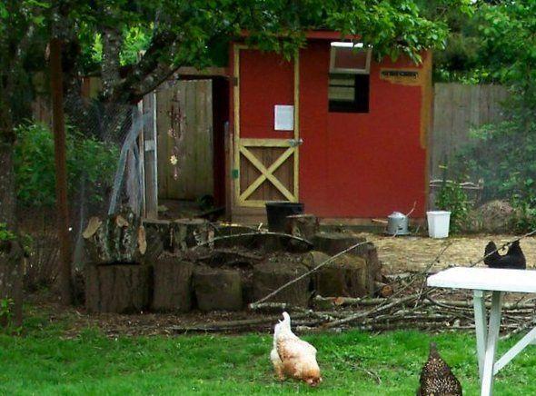 placering af hønsehus
