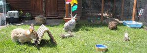 Kaninbur, kaninbur med løbegård, stort kaninbur